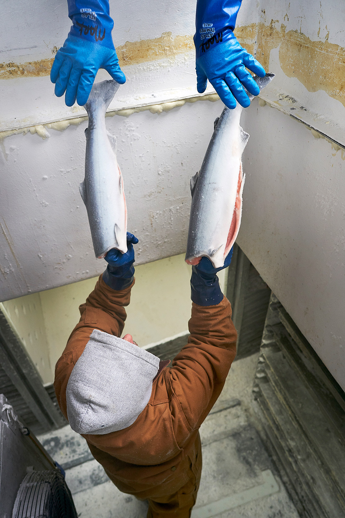 Sitka_BellaDawn_0624-bluehands-frozenfish