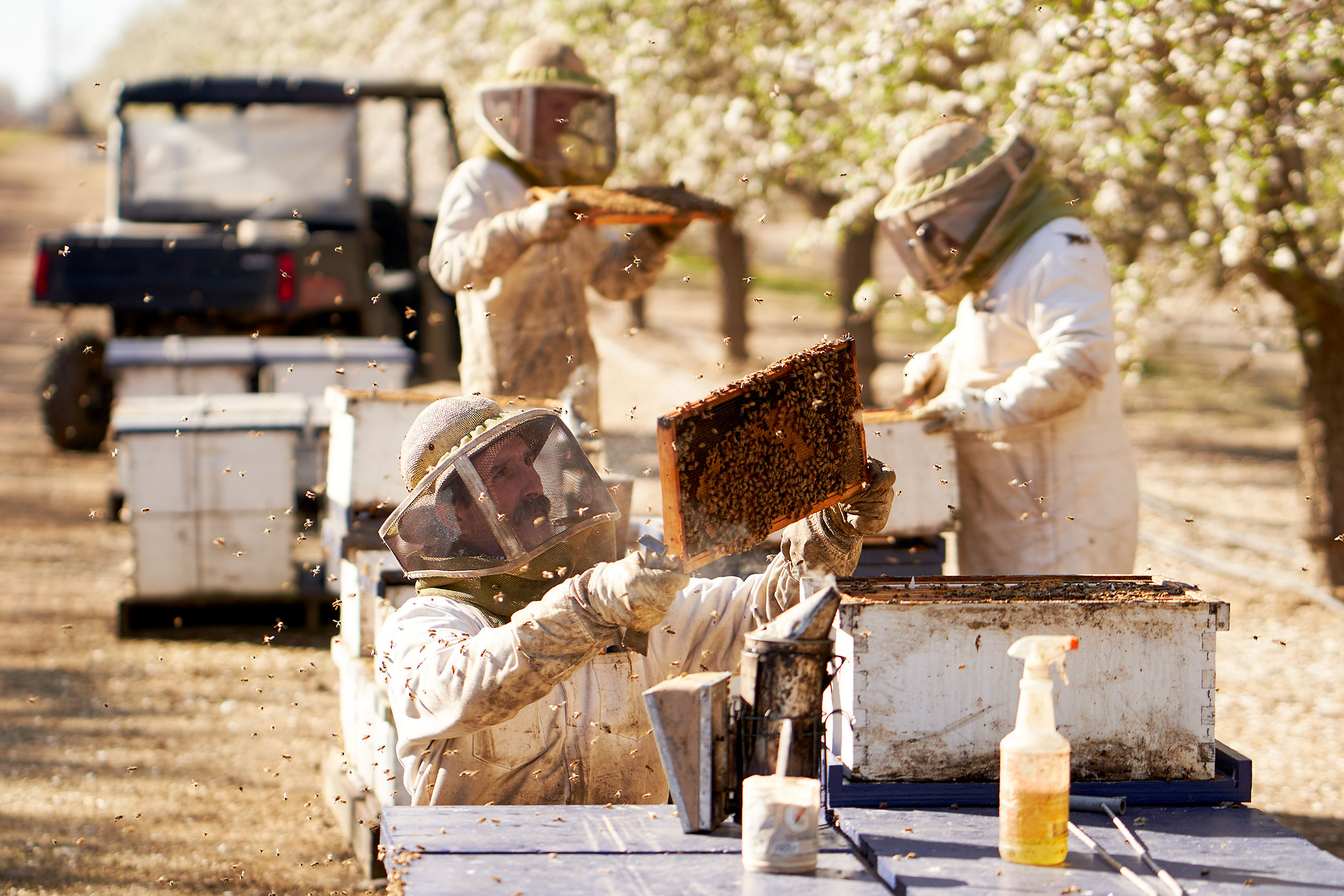 almond_bloom1410-bee-keeper