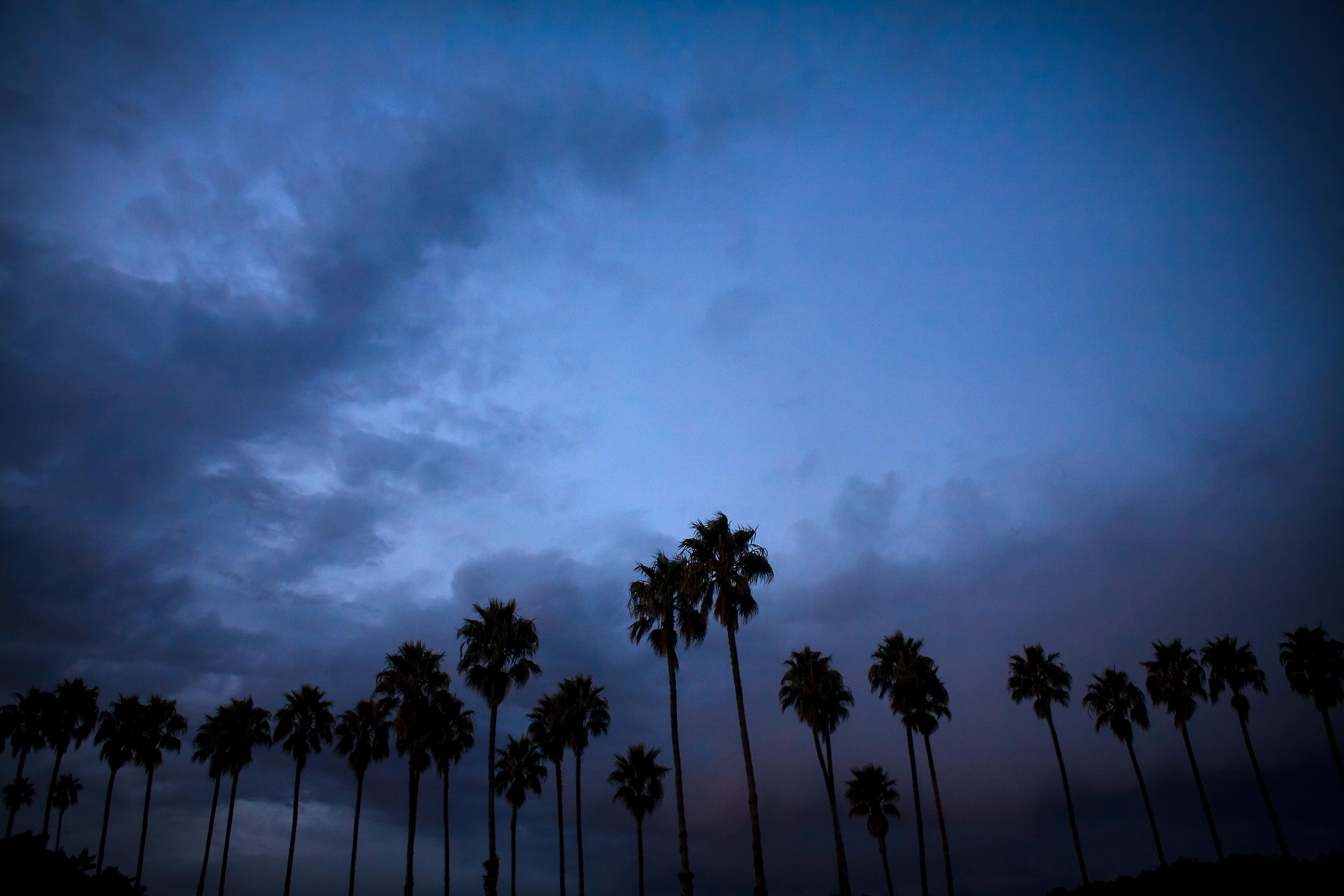 blue-dark-sb-palms